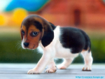 ASEAN Pets and Animals Website Directory