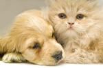 Hong Kong Pets and Animals Website Listing