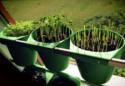 Can Urban Vegetable and Herb Farming Feed Bangkok