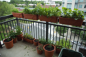 Container Gardening in your Bangkok Condo or Apartment.