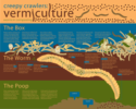 Vermiculture, Worm Composting and Worm Tea (Vermitea) Thailand