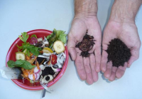 Who Are Your Worm Compost Customers in Thailand